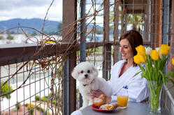 Pet Friendly Hotels - Napa, CA