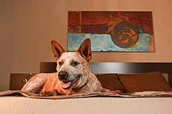 Pet Friendly Hotel - Wichita